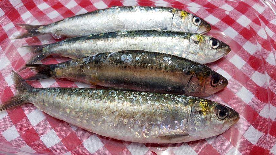 como escolher sardinhas